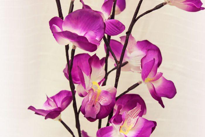 Led Beleuchtung Orchideen : LEDOrchideen